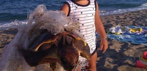 La storia di Gabriele e della tartaruga intrappolata nella plastica