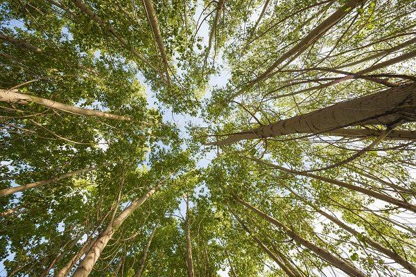 Gli alberi mangia plastica